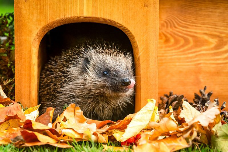 Hedgehog Wooden House